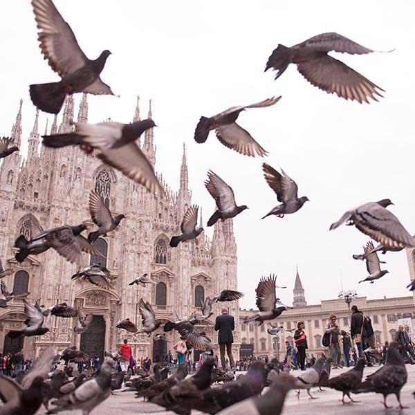Picture of the Milan Cathedral